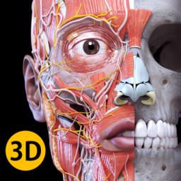 Скачать Анатомия - 3D Атлас